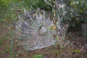 Vackert daggfyllt spindelnät